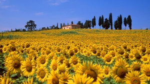 sports holidays in tuscany italy